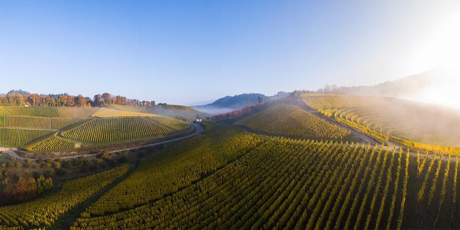 Alexander laible vineyards