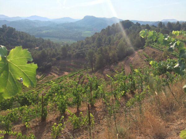 Belondrade nerin terra vineyards 2