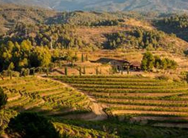 Belondrade nerin terra vineyards