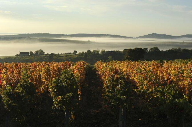 Berthier vineyard