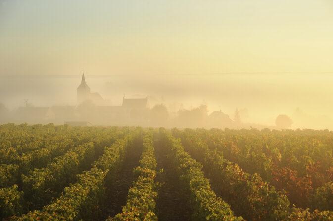 Berthier vineyards