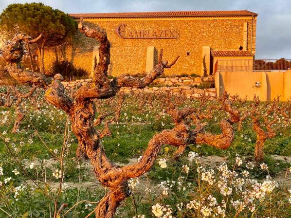 Camplazens vineyard