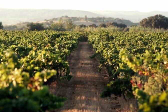 Cassagne et vitailles vineyard