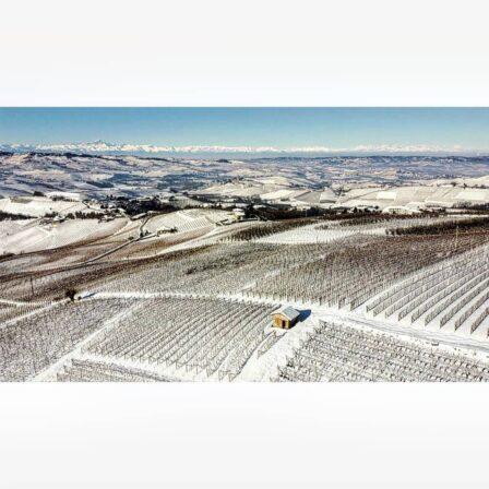 Claudio alario vineyards