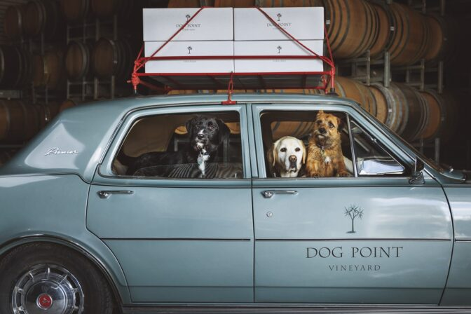 Dog point dogs