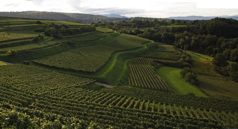 Huber bienenberg wijngaard