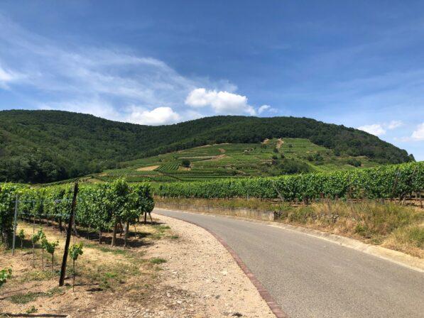 Hugel wijngaarden