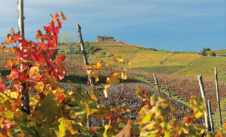 Manfredi vineyards 2