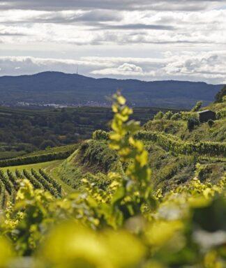 huber wijngaard