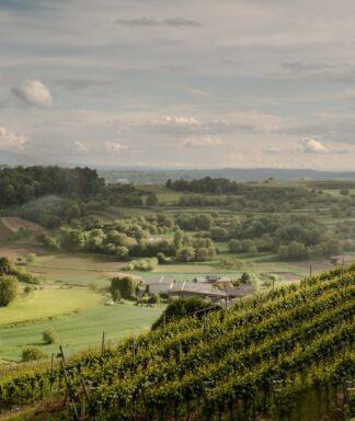 Huber Baden wijngaard