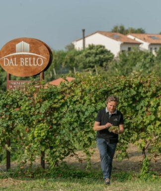 Celeber vineyard