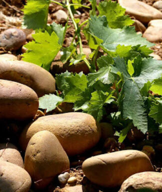 Chateauneuf keien