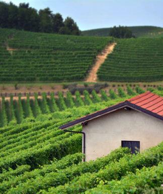 Claudio alario vineyards 1