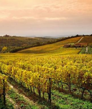 Collosorbo vineyard