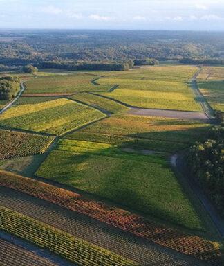 Delaunay vineyards