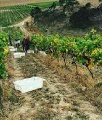 Dog point vineyard chardonnay
