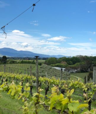 Dog point winery