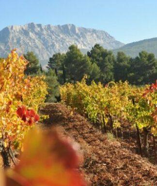 Henri bonnaud vineyard