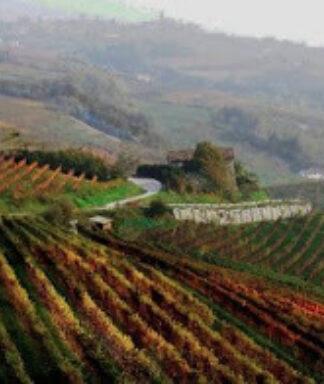 Il palazzotto vineyards