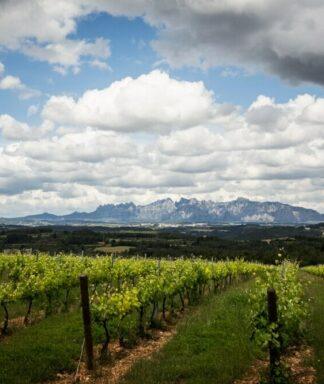 Pere ventura vineyards