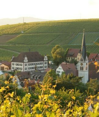 Schlossgut ebringen vineyard 2
