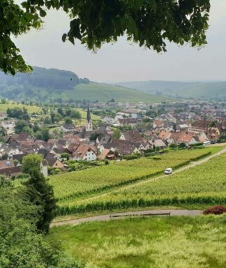 Schlossgut ebringen vineyards 2
