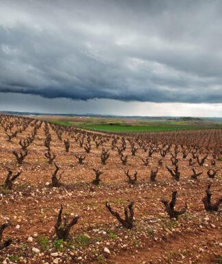 Teso la monja vineyards